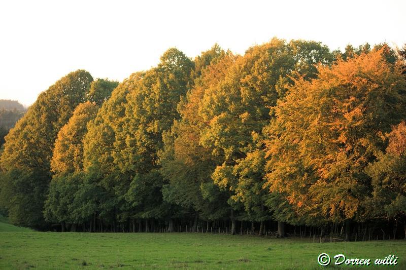 promenade sur les fagnes et alentours ( jalhay ) le 16-oct-2011 Dpp_jalhay---16-o...1---0049-2dd726d