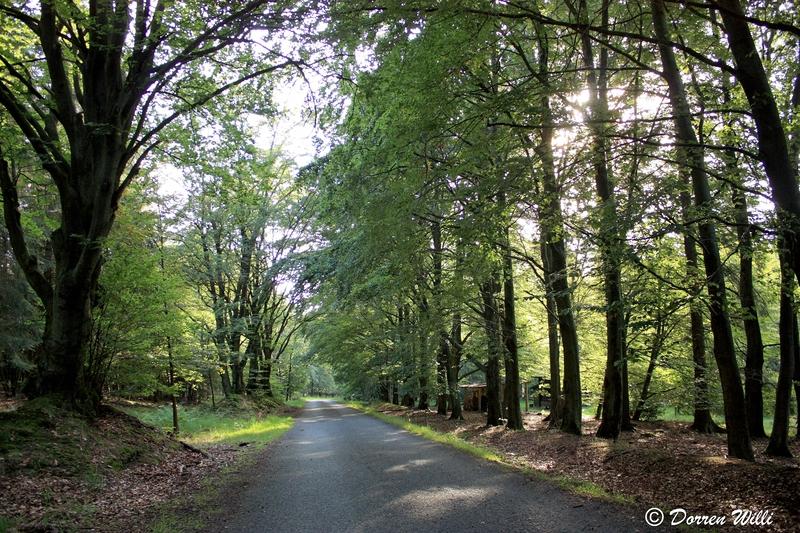 Ballade dans les Hautes fagnes et les sous-bois le 10-08-2011 Img_3099-800x600--2bbe92d
