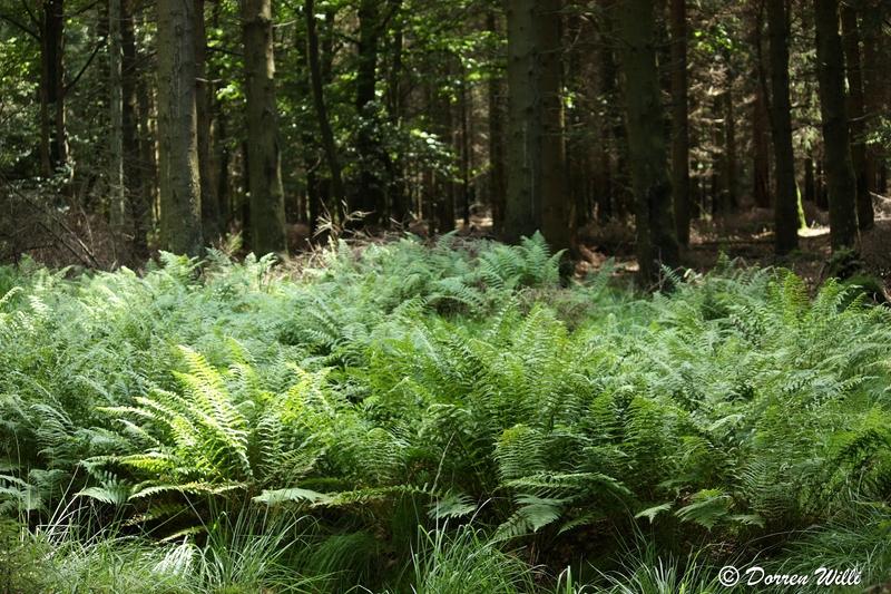 Ballade dans les Hautes fagnes et les sous-bois le 10-08-2011 Img_2683-800x600--2bbd79f