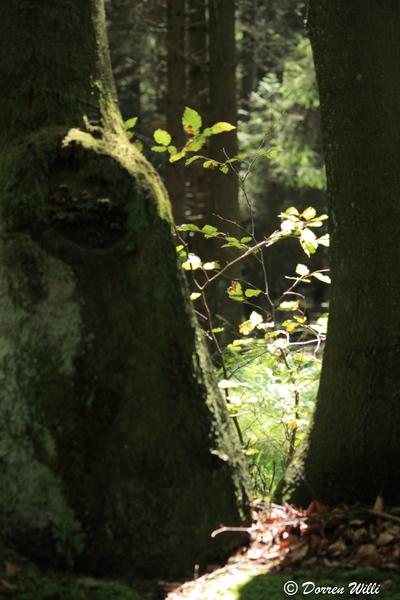 Ballade dans les Hautes fagnes et les sous-bois le 10-08-2011 Img_2693-800x600--2bbd909