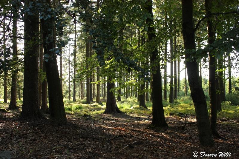 Ballade dans les Hautes fagnes et les sous-bois le 10-08-2011 Img_3087-800x600--2bbe8c7