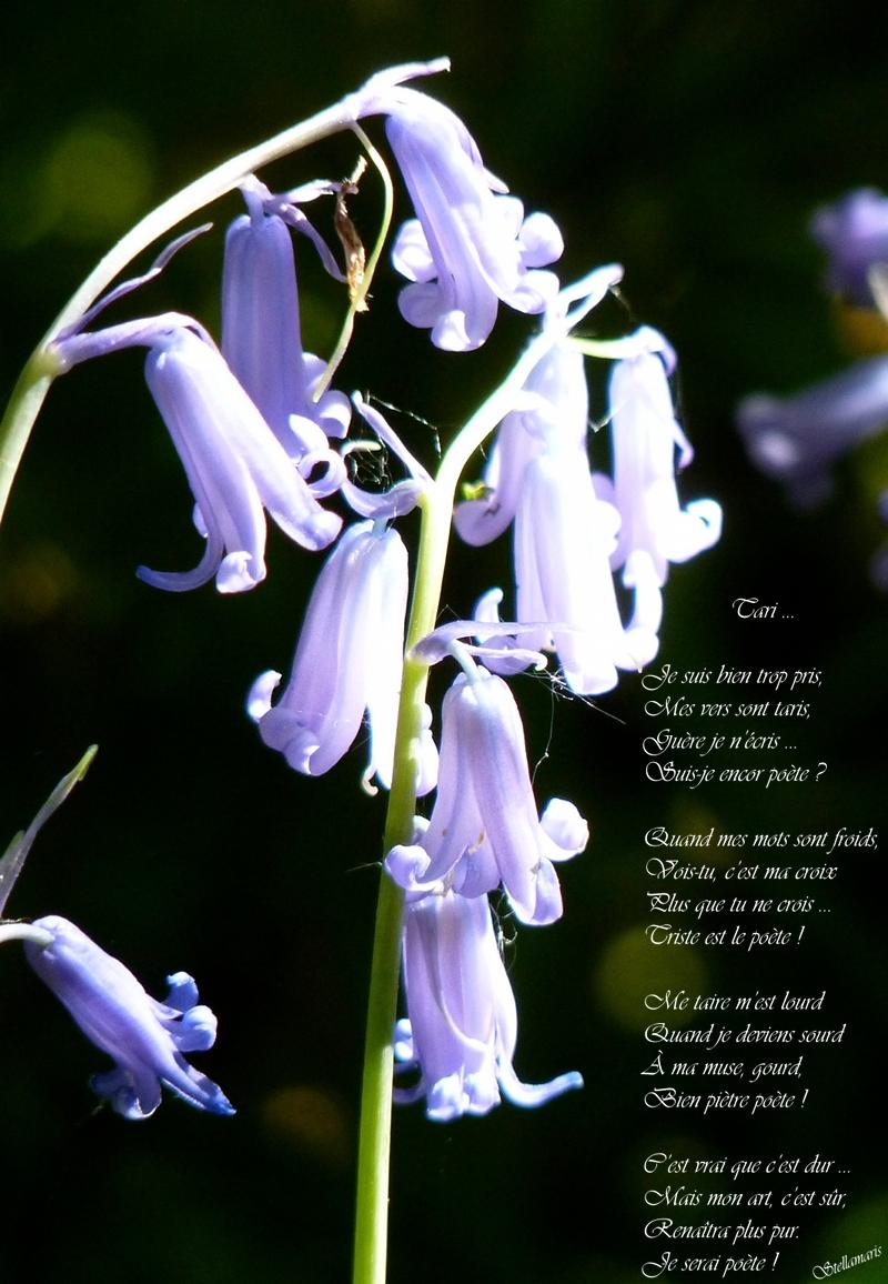 Tari … / / Je suis bien trop pris, / Mes vers sont taris, / Guère je n'écris … / Suis-je encor poète ? / / Quand mes mots sont froids, / Vois-tu, c'est ma croix / Plus que tu ne crois … / Triste est le poète ! / / Me taire m'est lourd / Quand je deviens sourd / À ma muse, gourd, / Bien piètre poète ! / / C'est vrai que c'est dur … / Mais mon art, c'est sûr, / Renaîtra plus pur. / Je serai poète ! / / Stellamaris